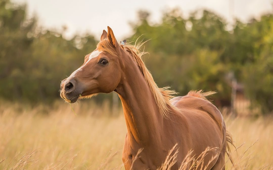 The Horse May Talk